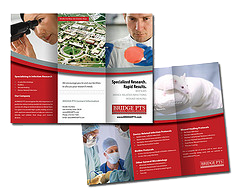 Bridge PTS Brochure