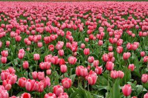 Spring is Blooming!